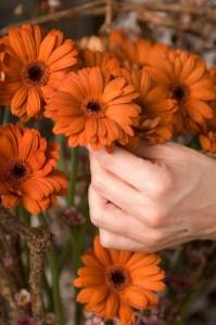 Oranje koningsdagbloemen foto- mooiwatbloemendoen.nl op losse bloemen blog Gerbera