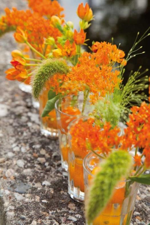 Oranje koningsdagbloemen foto- mooiwatbloemendoen.nl op losse bloemen blog Asclepias
