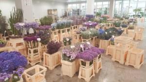 lossebloemen veiling plantion binnenkijker lossebloemen.nl bloemen blog