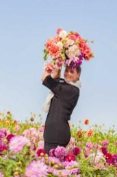 Famflowerfarm dahlia velden - foto's - lossebloemen-117