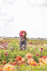 Famflowerfarm dahlia velden - foto's - lossebloemen-3
