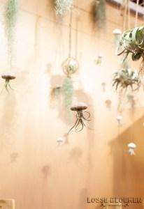 Luchtplantjes vliegende kwalletjes van airplants Lossebloemen trade fair Royalfloaholland Aalsmeer 9 nov 2018 - bloemenblog lossebloemen.nl