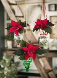 Stralende sterren in November, Kerststerren als mini plant POINSETTIA - LOSSE BLOEMEN BLOG