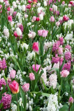 Mix nu bloembollen voor kleur in het voorjaar blog