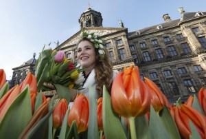 Nationale tulpendag Zaterdag 18 januari - gratis tulpen plukken in Amsterdam