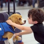 KLM Lost and Found Beagle Superhero