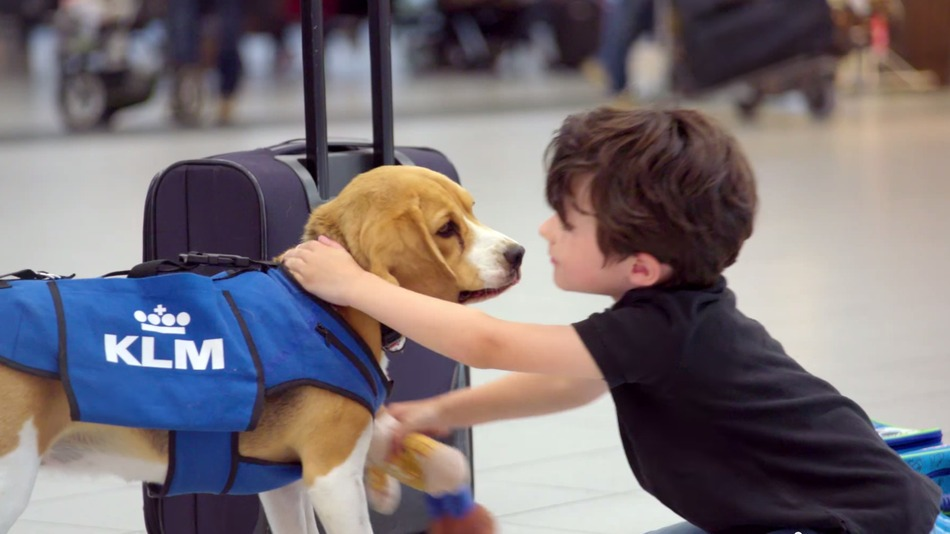 KLM Lost and Found Beagle Superhero