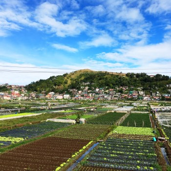 Strawberry Farm in La Trinidad, Benguet