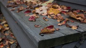 fall leaves on the wooden stairs