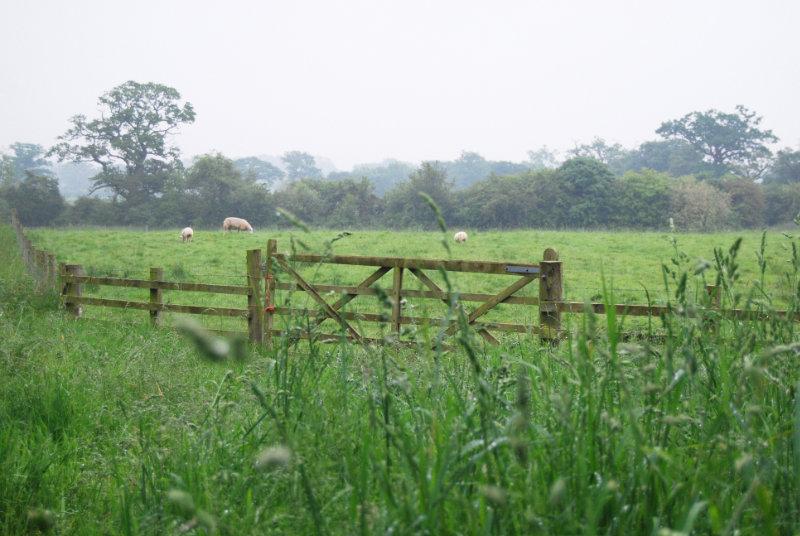 Lost Barn Field