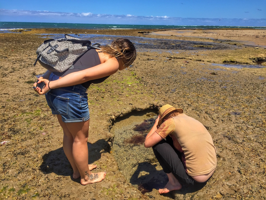 Almost Stepping on a Blue Ringed Octopus in Australia!