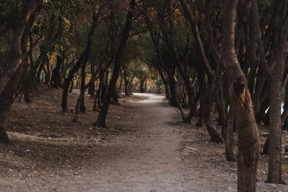 Photo of bent trees and pathway near Acropolis in Athens Greece.