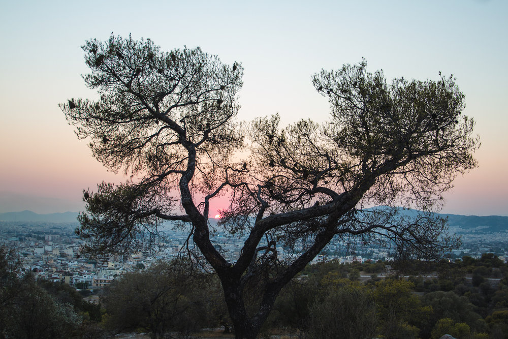 Photo of silhouetted tree in Athens Greece.