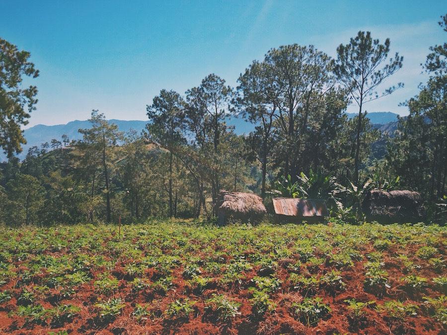 In Furcy Haiti, a photo of small grass huts near farmland in the mountain hillsides.