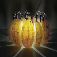 Back to Light: Using Fruit as Energy Source to Power Light Bulbs