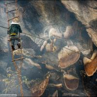 Stunning Images of the Nepalese Honey Hunters