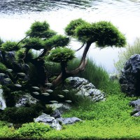 Beautifully Designed Aquariums Compete in The International Aquatic Plants Layout Contest