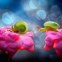 Nordin Seruyan's Beautiful Garden Insect Photography