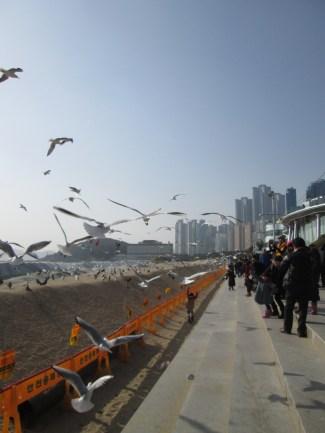 South korea 317 (2)
