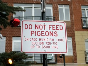 Anti Pigeon