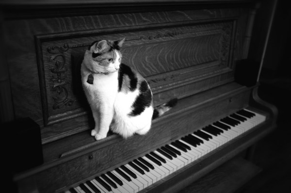 Day 132: Cat on a Piano