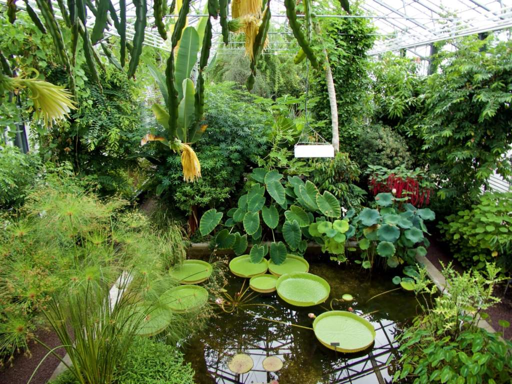 Plant lovers are going to love this free botanical garden in the east of St. Gallen.