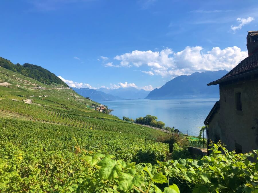 Lavaux Unesco vineyards