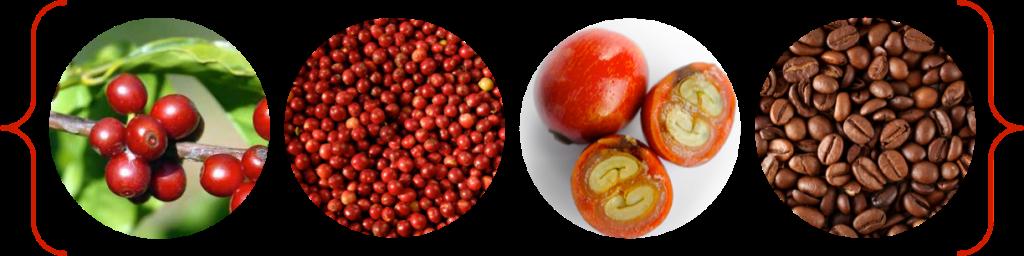 coffeefruit, coffee berry, coffee, antioxidants