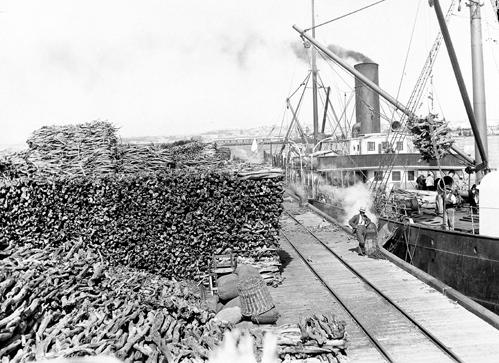 sandalwood_export_lost katanning early history