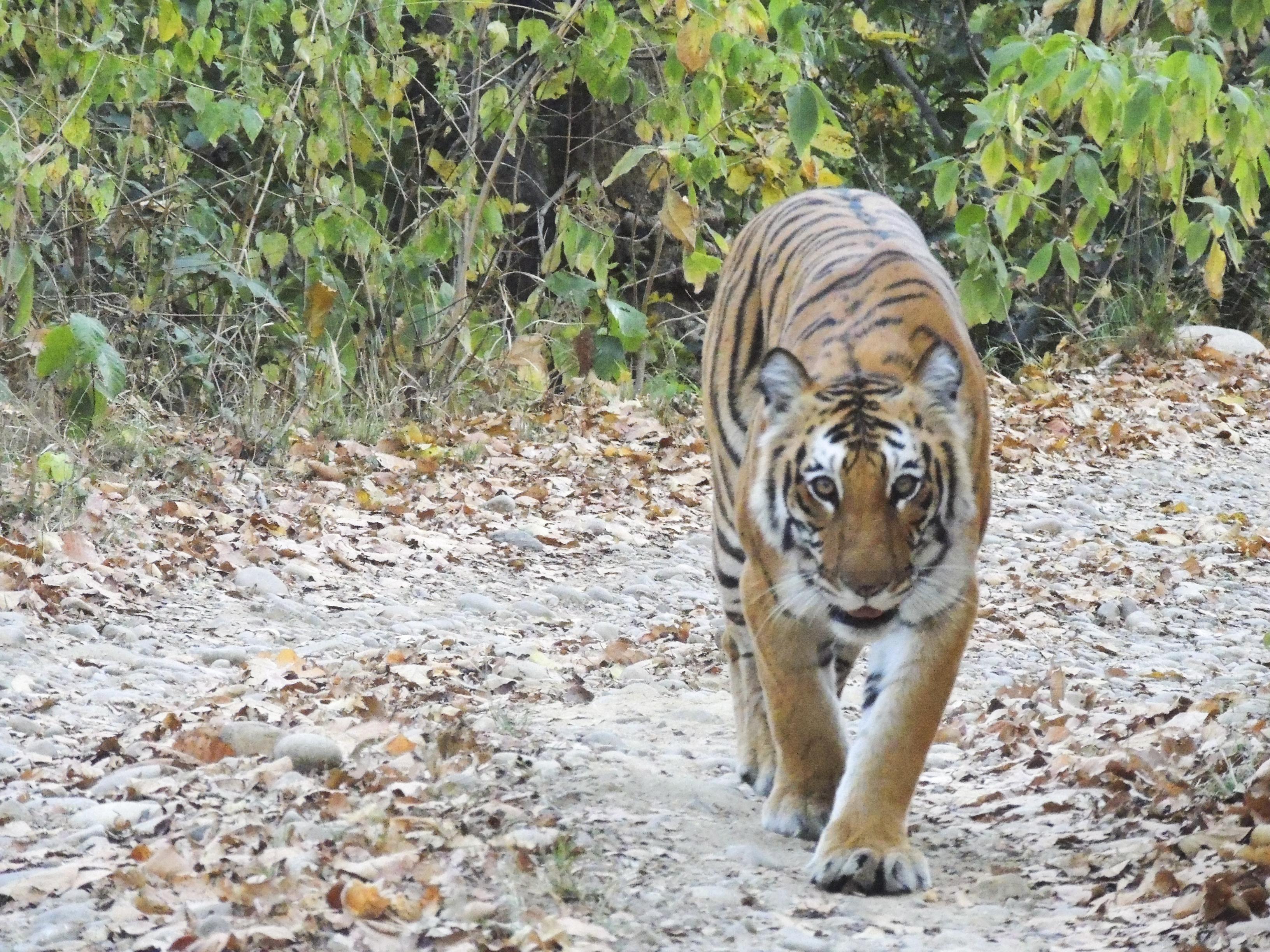 Uttrakhand Himalaya | Jim Corbett Tiger Reserve