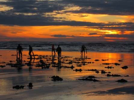 digging for clams in Nova Scotia with sunsetting