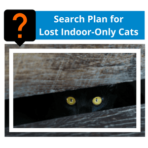 Search Plan for Lost Indoor-Only Cats