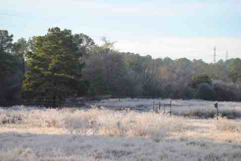 Winter in Bastrop TX