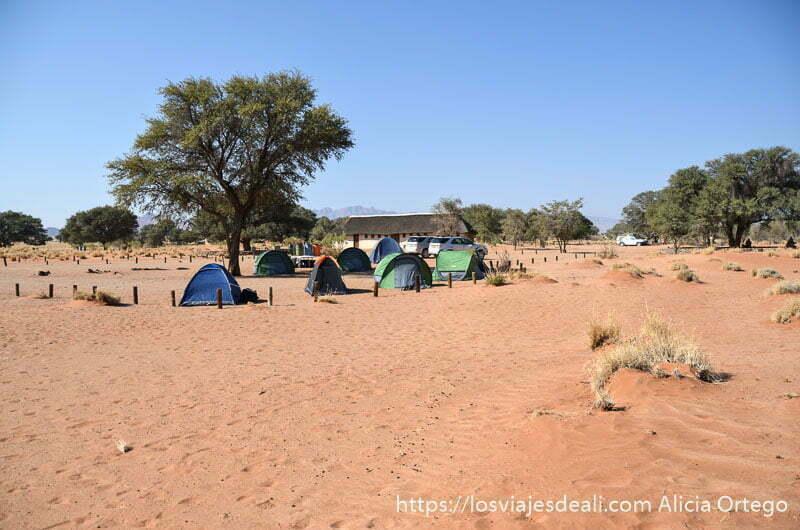 tiendas de campaña en círculo sobre la arena y bajo sombra de un árbol en el desierto del namib