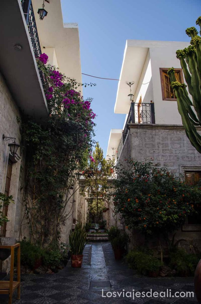 patio alargado y estrecho lleno de plantas y flores en el hotel de arequipa