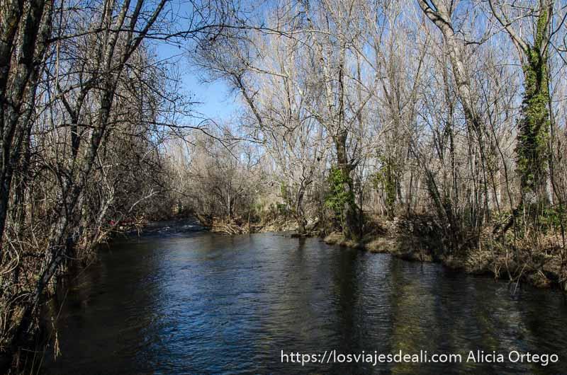 río y árboles sin hojas en la sierra de madrid