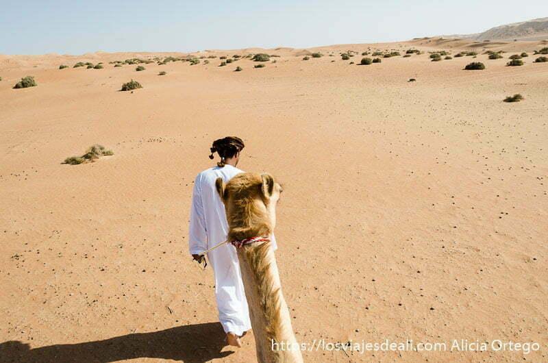 perspectiva desde el camello con su cuello y cabeza delante y muchas dunas alrededor