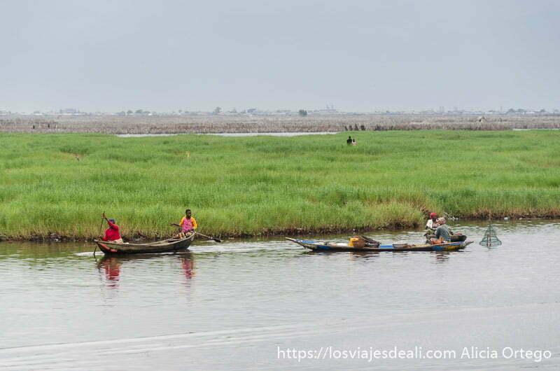 dos barcas con dos personas cada una y detrás un campo verde de plantas acuáticas de camino a ganvie