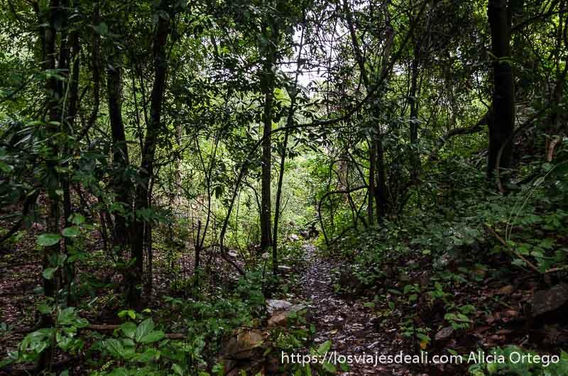 camino en el bosque en benin