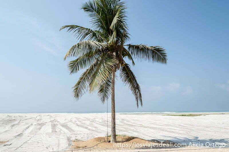 palmera cocotera enmedio de playa de arena blanca visitas que hacer cerca de salalah