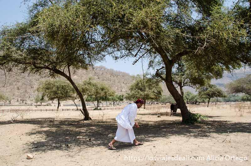 muhamad recogiendo frutos de tamarindo bajo los árboles visitas que hacer cerca de salalah
