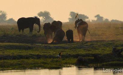 elefantes en parque chobe