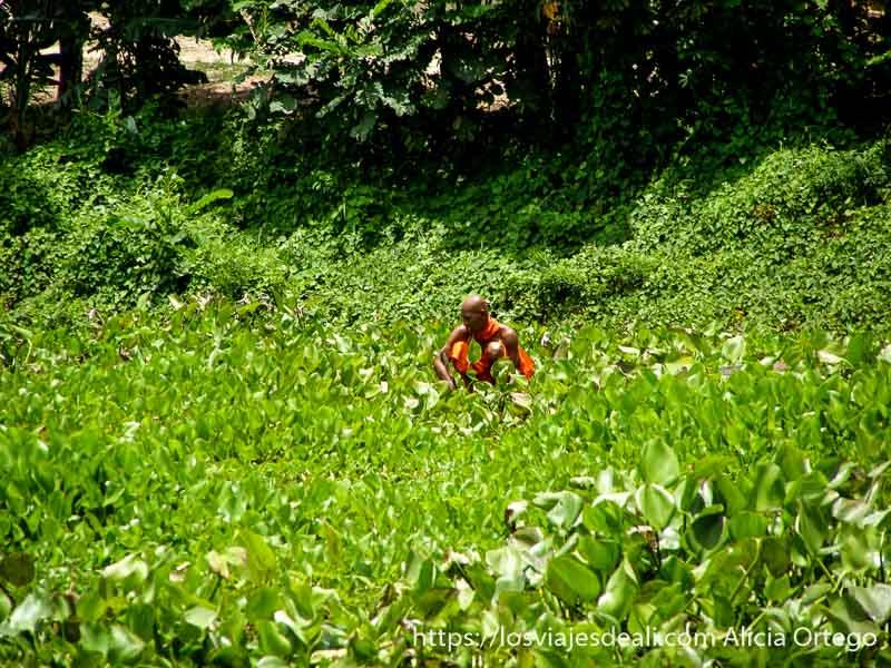 monje budista con hábito naranja agachado en un campo de lirios excursión cerca de los templos de angkor