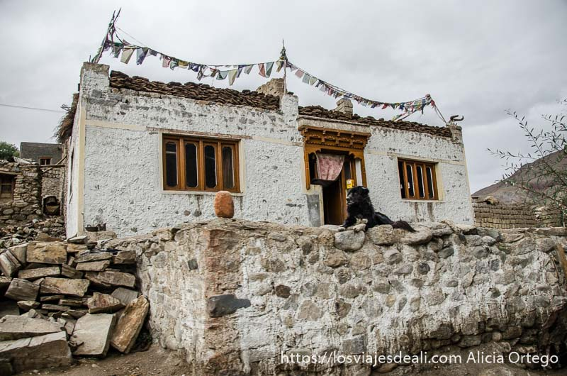 casa de estilo tibetano encalada con perro en la puerta carreteras del himalaya indio