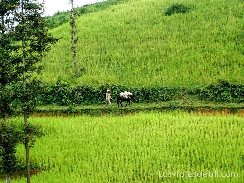postales-de-viaje-vietnam