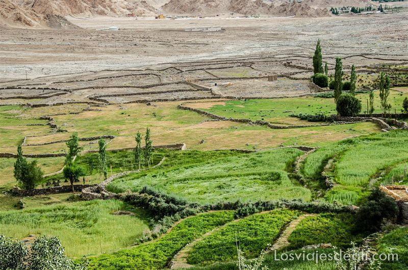 trekking cerca de Leh campos de saboo