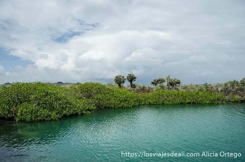 laguna con vegetación alrededor en isla san cristóbal galápagos