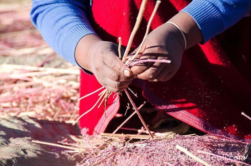 cereal de quinoa en comunidad humacchuco