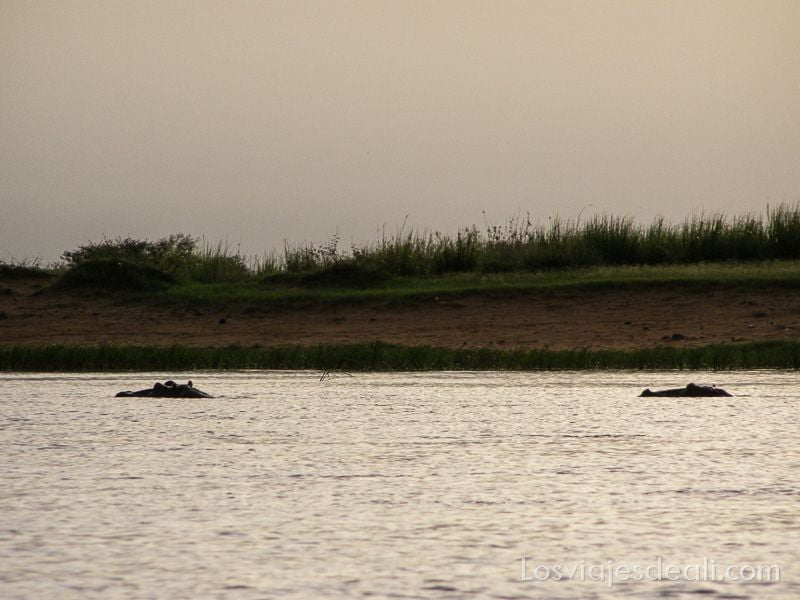un pueblo del río niger hipopótamos en el río