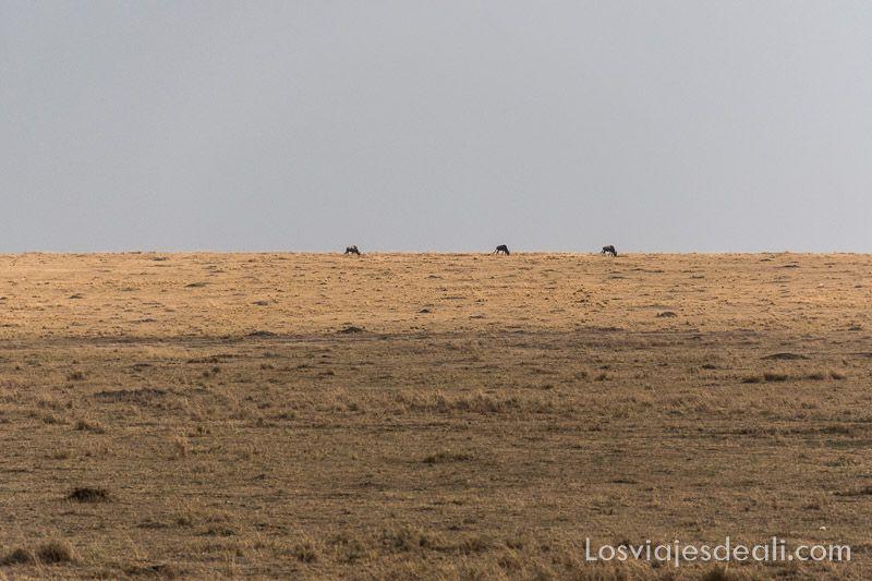 dos días en masai mara horizonte